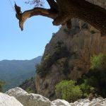 Wild Sardegna